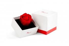 Eternal Rose Gift Box