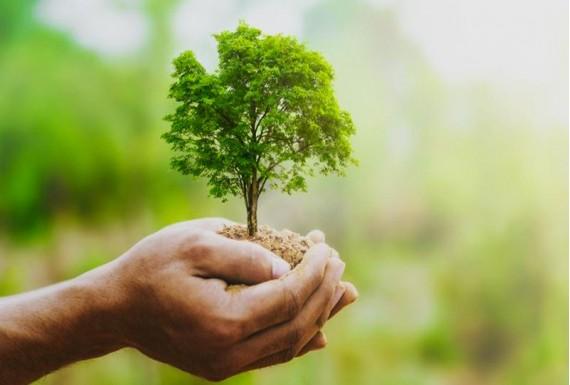 درخت اهدایی