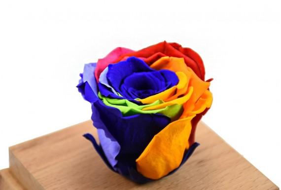 رز جاودان هفت رنگ
