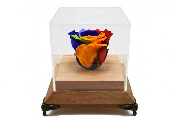 Eternal colorful rose